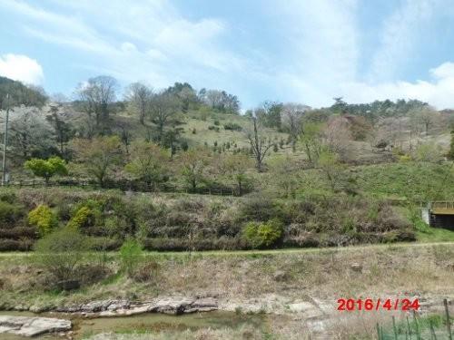 春の、ラフォーレ福寿の里、正面の、風景 旧木の実牧場跡地