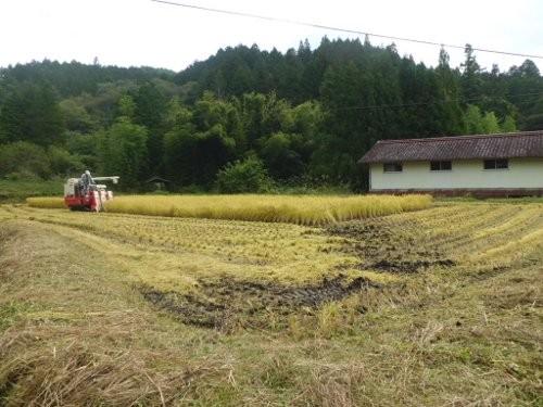 稲刈りしました