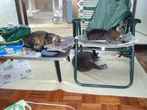 暑くて、日中は室内で寝てる猫達・・