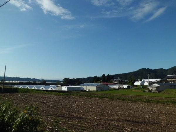 橋場農園、正面、ごく一部しか写らない・・・・