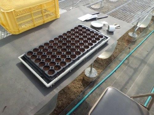 高設架台の上で種まきしてます