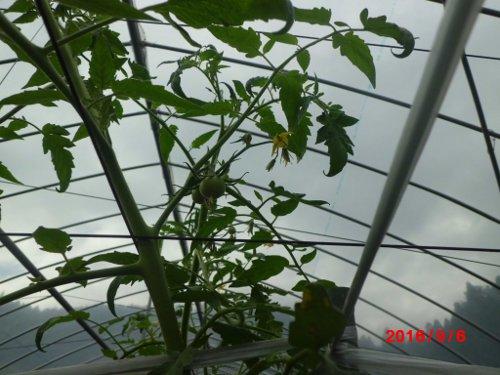 殆どの花芽から、枝と脇芽が発生してます