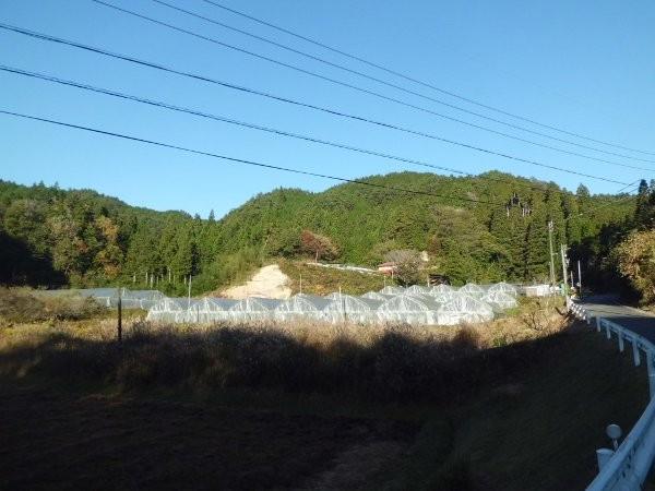 平成27年 10月 秋の保温状態のハウス