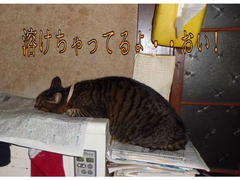我が家の猫・・蓄熱ストーブにのっかてます・・