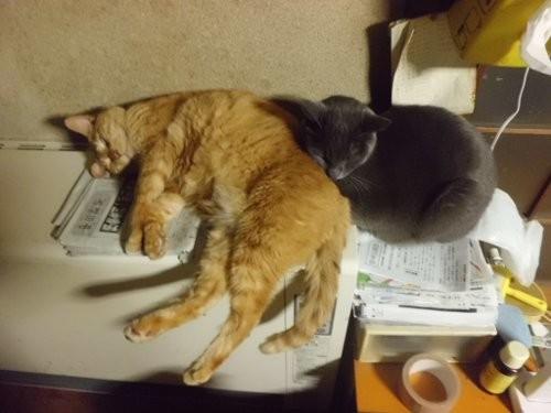 暖かそうに寝ていますねえ