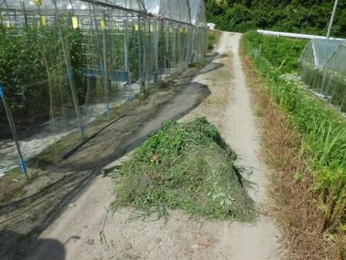 草取りした後の草・・・・毎日でます