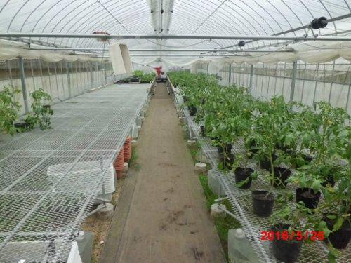 高設ハウス・・最後の残り苗とか、販売用の野菜苗の売れ残りとか・・