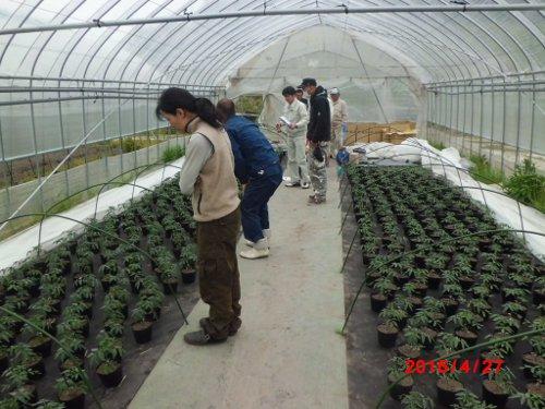 就農2年目、新米パパの山田トマト農園