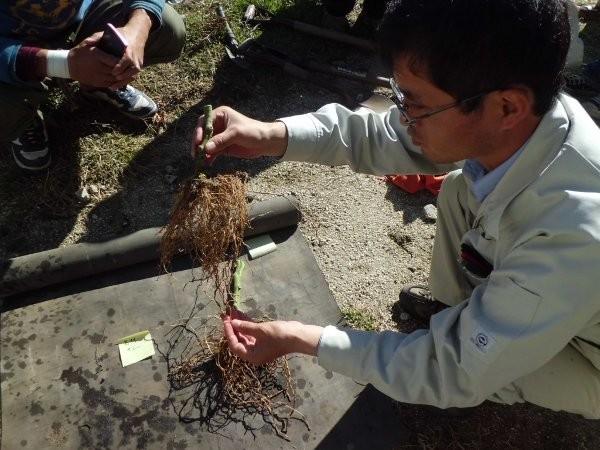 根の診断を行う、岐阜県農業普及員