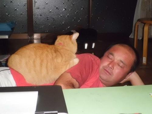 猫とうたた寝する、私
