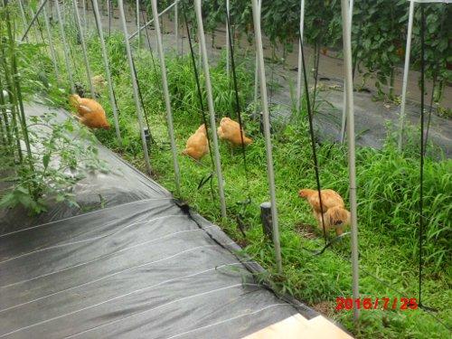 石川農園の農園内ペットです