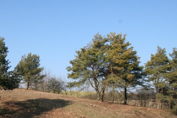 So sah das Biotop nach der Erstpflege durch den kommunalen Landschaftspflegeverein aus.