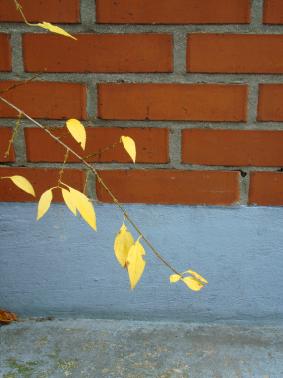 Herbstspaziergang einer Wochenaufenthalterin, Basel 2007