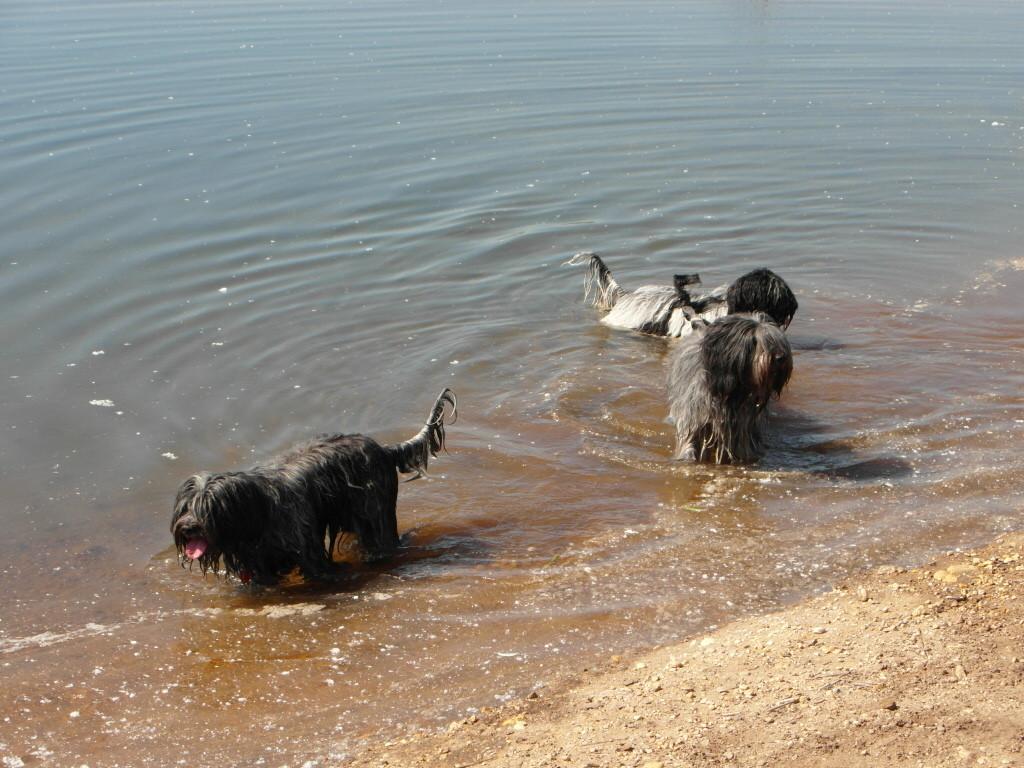 Die Großen machen den Anfang vom Badespass ;-)