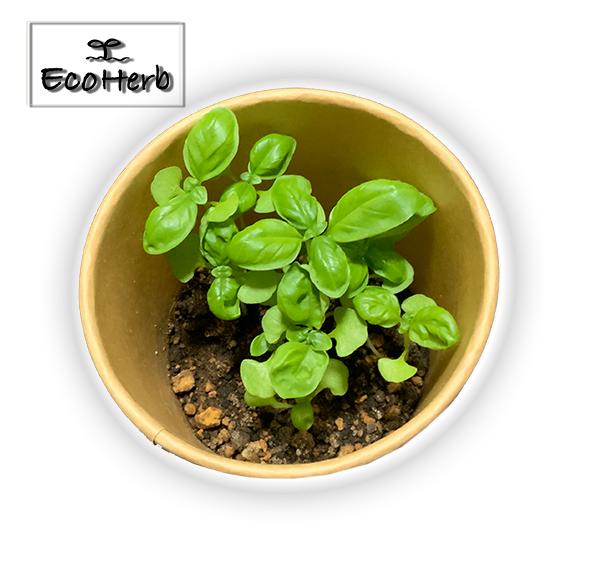 エコ炭配合土を利用したハーブの種類