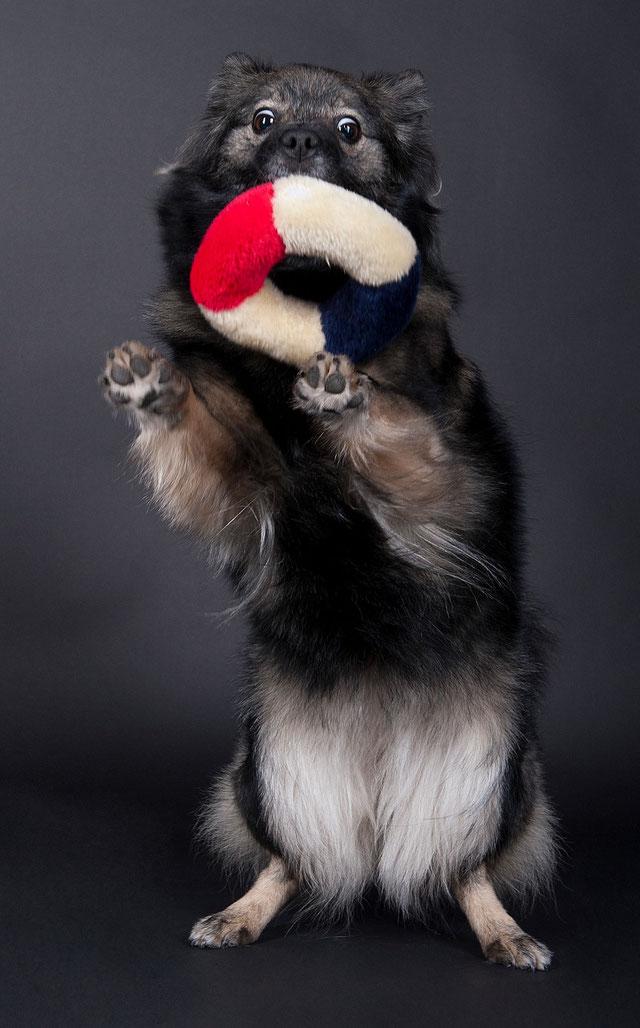 Dog Dance Training Basel