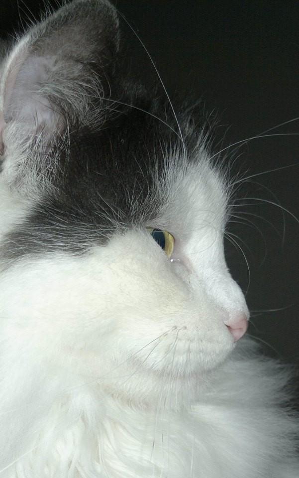 Yuki, hat ein wunderschönes Profil