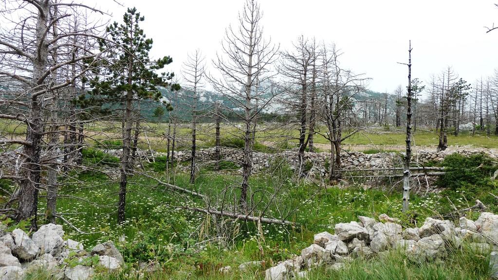 "Punta Ruina oberhalb von Starigrad ""Wildwestlandschaft"""