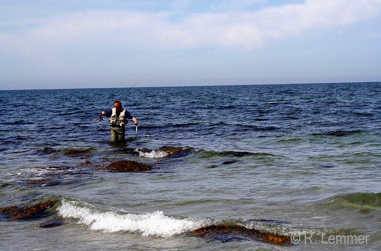Hornhecht auf Fischfetzen an der Wasserkugel