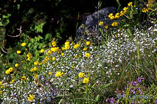 Alpenblumen auf dem Vogel