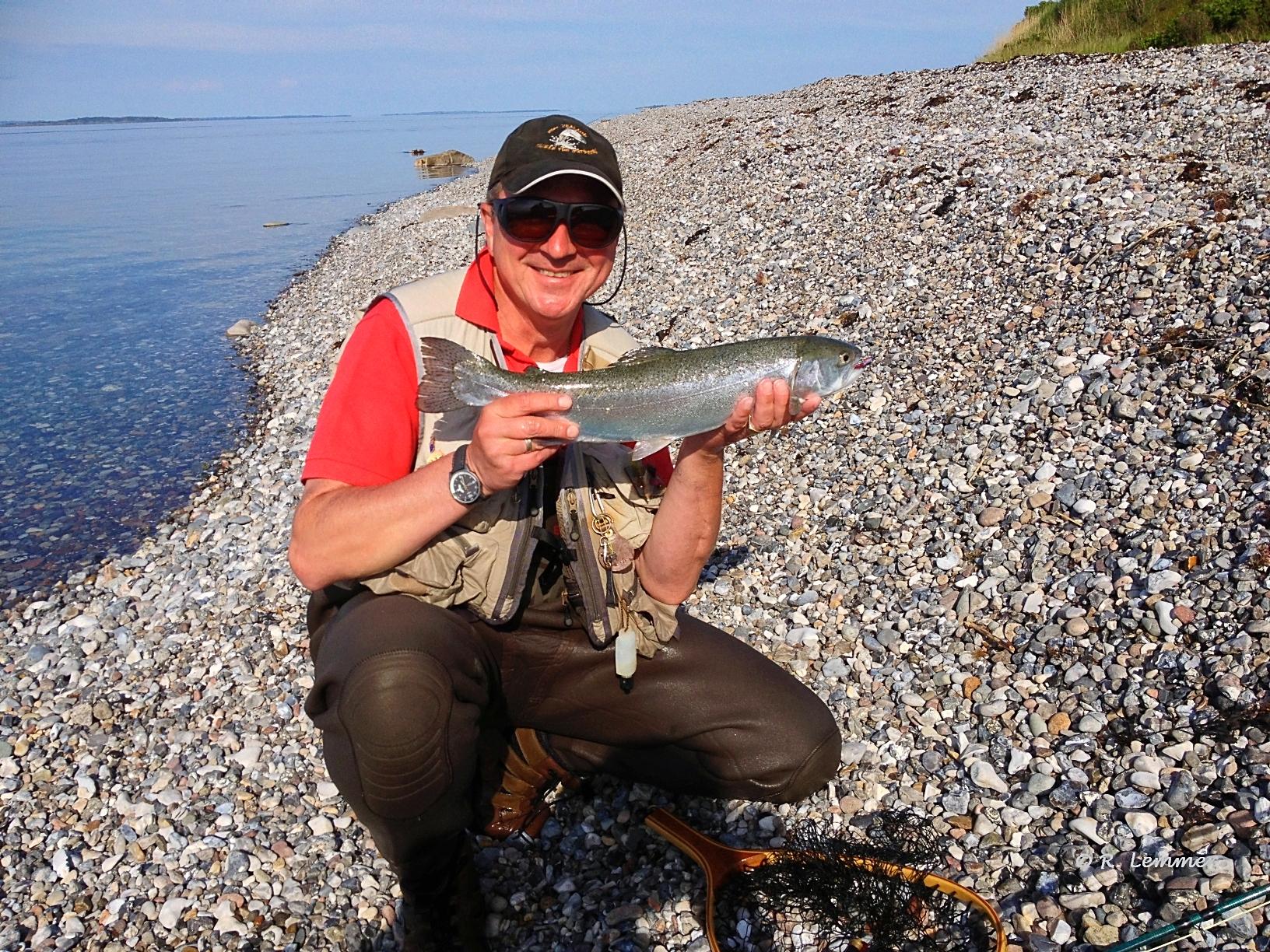 55 cm Meerforelle auf Aero in Dänemark gefangen