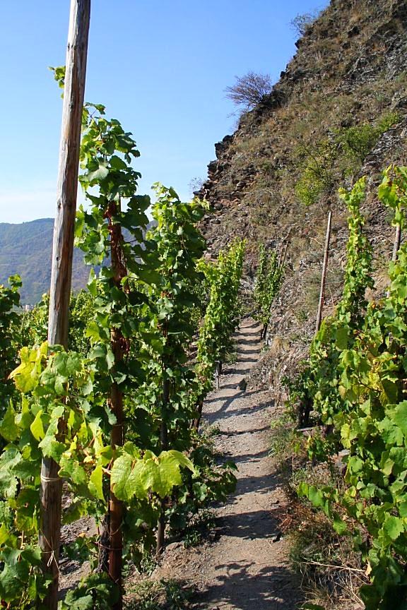 Zwischen den Weinreben auf dem Calmond Klettersteig