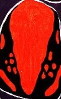 Galagtonotus