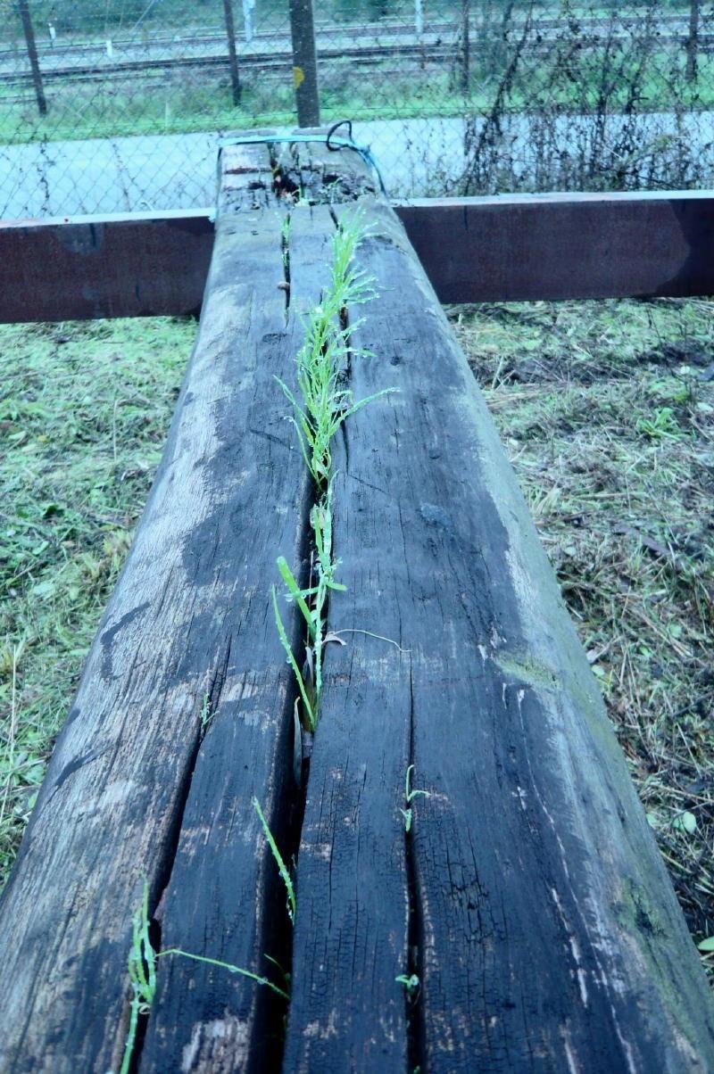 L'herbe pousse même sur une poutre du Ber