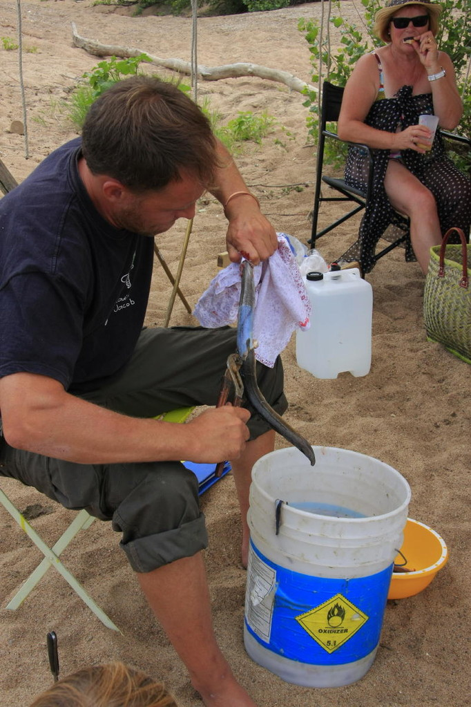 Alex a rapporté des anguilles