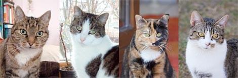 meine 4 Katzen