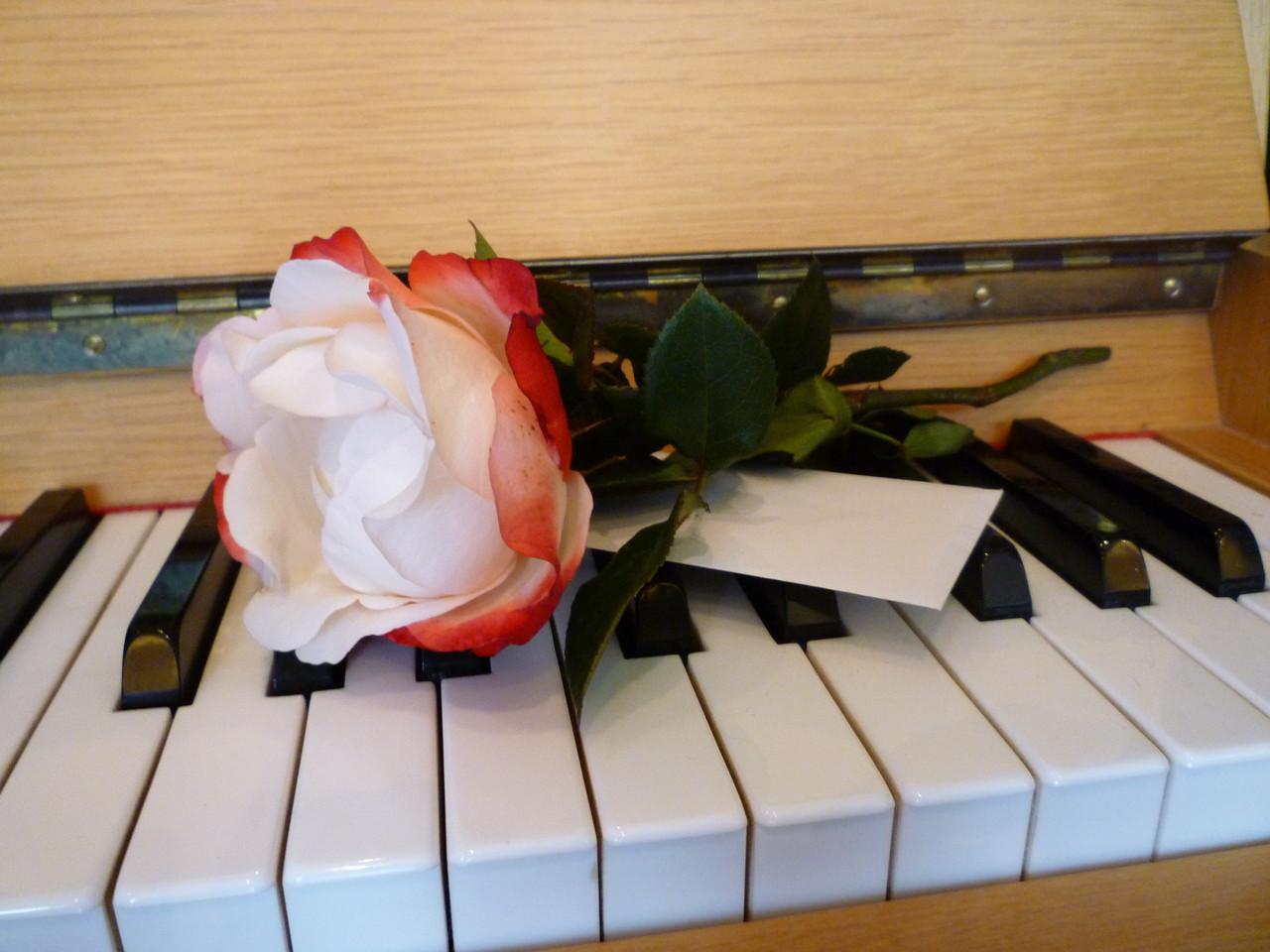 Blumen, Farben und Musik
