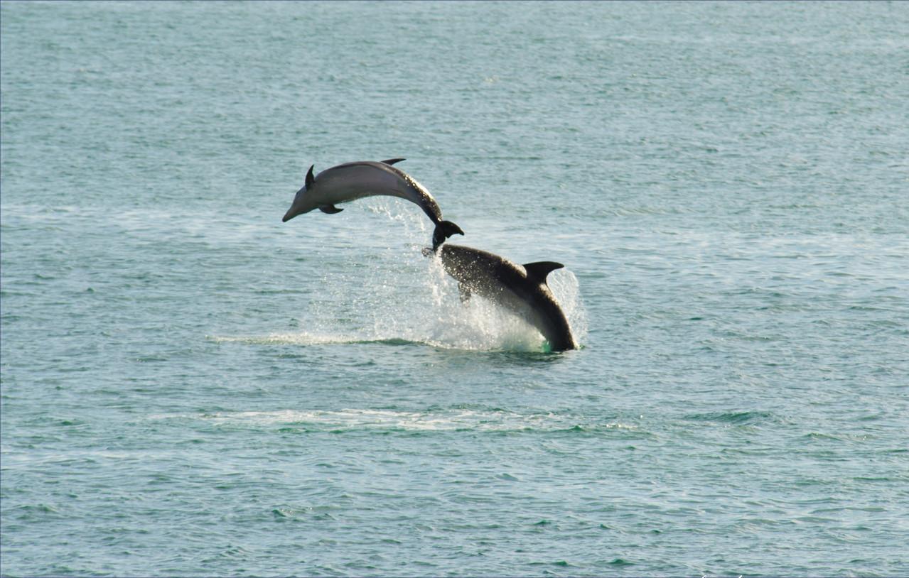 Bay of Isles - North Island - New Zealand