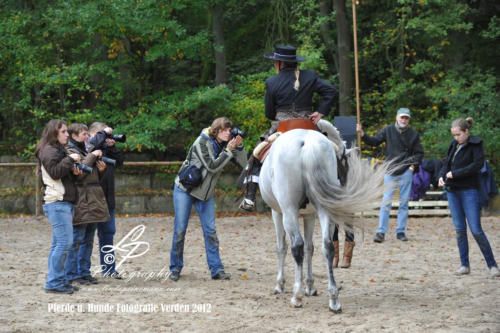 Workshop - Pferdemuseum Verden - Pferdefotografie