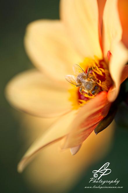 Hummel und BienenSie erhalten den Kreislauf der Natur - Hummel und Bienen