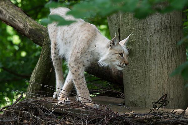 """VHS Workshop """"Tierfotografie für Fortgeschrittene"""" 12.07.2014  - Leitung & Fotografie Linda Peinemann"""