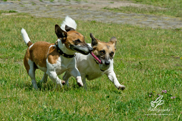 """Hunde & Pferdefotografie für Anfänger/innen - Pferdemuseum Verden Mai 2014 - """"Sam & Lucy"""""""
