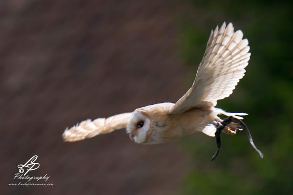 VHS Twistringen Workshop / Vogelpark Walsrode Juni 2014 - Flugschau - Wir haben einen super Tag erlebt mit vielen schönen Momenten. Leitung & Fotografie - Linda Peinemann