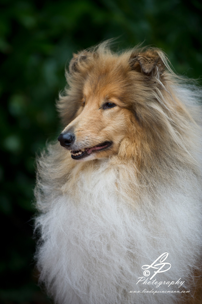 Workshop - Hundefotografie - 2012  - Pferdemuseum Verden. Leitung & Fotografie Linda Peinemann