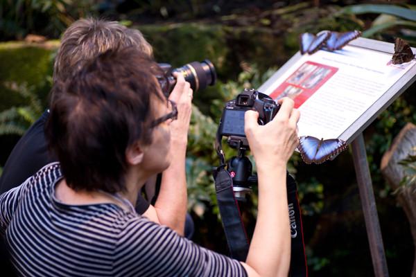 Makrofotografie - Schmetterlingshaus - VHS Bruchhausen Vilsen