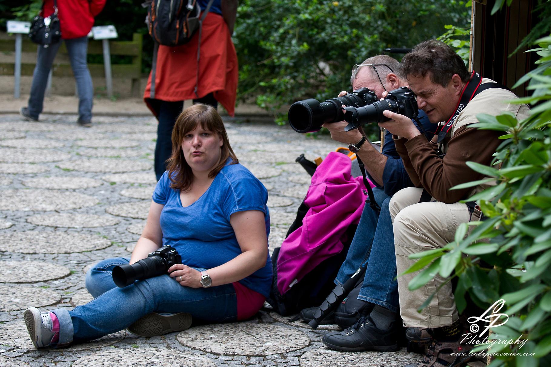 VHS Twistringen Workshop / Vogelpark Walsrode Juni 2014 - Mann! Der ist wieder weg!