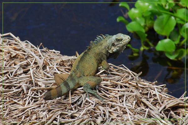 Teufelsinsel/Devil´s Island ( liegt 13 km vor der Küste von Französisch-Guayana in Südamerika)  French Guiana/South America