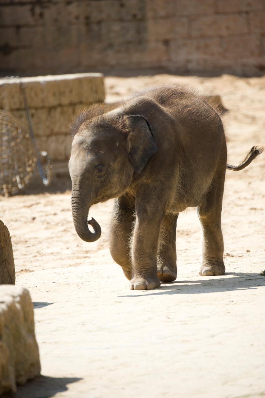VHS Foto Workshop - Hannover Zoo - 26.07.2014. Leitung Linda Peinemann