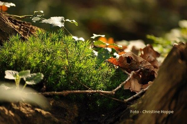 Landschaftsfotografie/VHS Twistringen 10/2014 - Foto - Teilnehmerin/Christine Hoppe