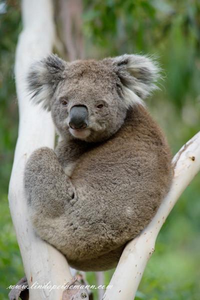 Australlia