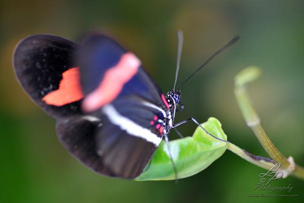 Makrofotografie - Schmetterlingshaus Bremen - Leitung und Fotografie Linda Peinemann Nov.2014