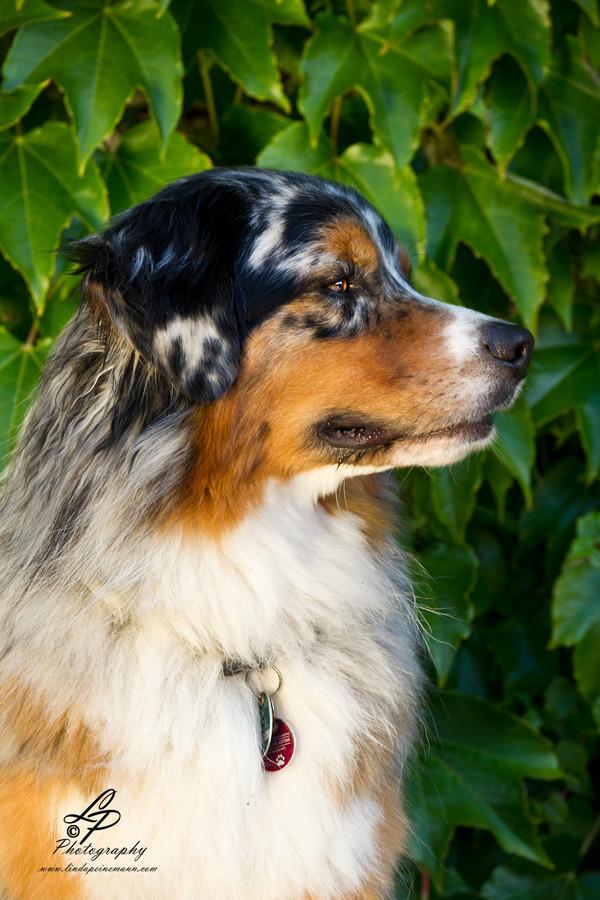 """Teil 1 - Hunde Fotografie - Workshop """"Pferde & Hundefotografie"""" Pferdemuseum Verden am 16.08.2014 - Fortsetzungsworkshop für Einsteiger - Leitung & Fotografie Linda Peinemann"""
