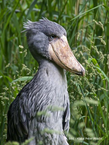 VHS Twistringen Workshop / Vogelpark Walsrode Juni 2014 - Teilnehmer/in in Aktion