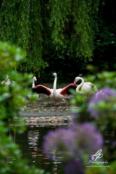 VHS Twistringen Workshop / Vogelpark Walsrode Juni 2014 - Leitung & Fotografie Linda Peinemann