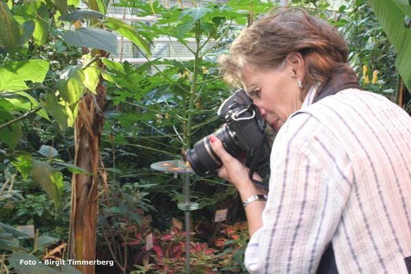 Makrofotografie - Schmetterlingshaus - VHS Twistringen