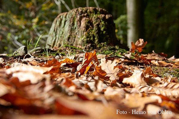 Landschaftsfotografie/VHS Bruchhausen Vilsen - Foto - Teilnehmer/Heino von Ohlen  10/2014